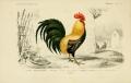 Галльский петух – колоритный символ Франции | Дизайн в стиле Прованс - французский стиль кантри в вашем доме