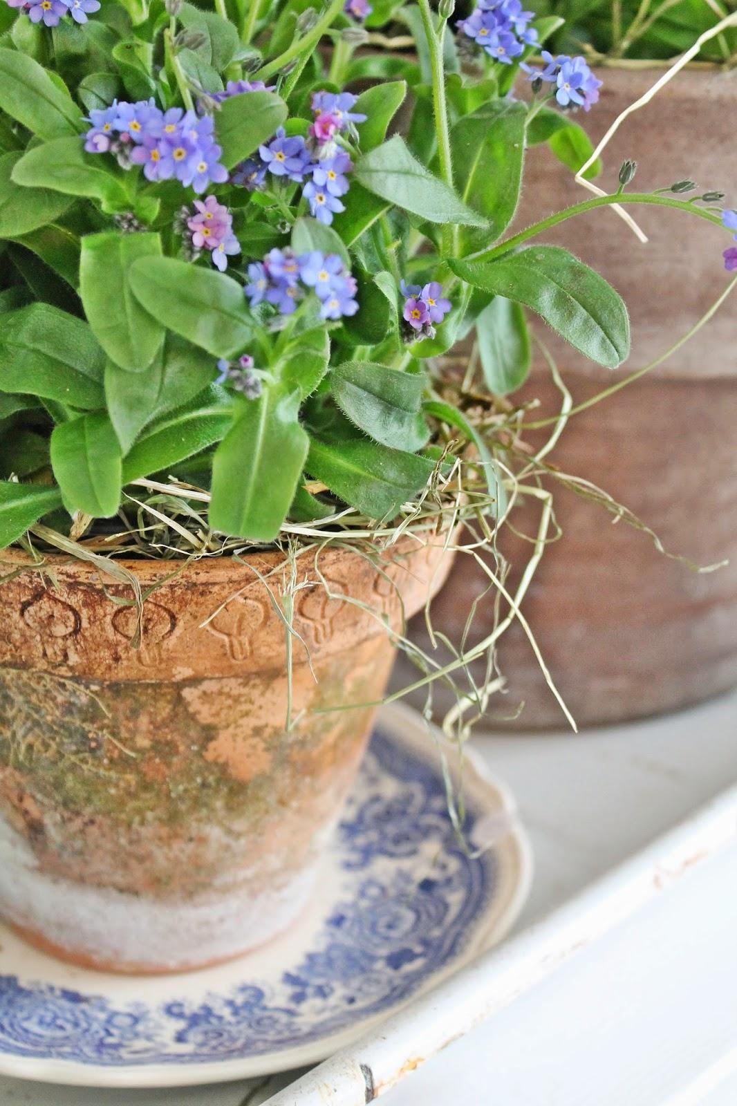 dekor/vesennie-cvety-k-pashe-foto-10.jpg