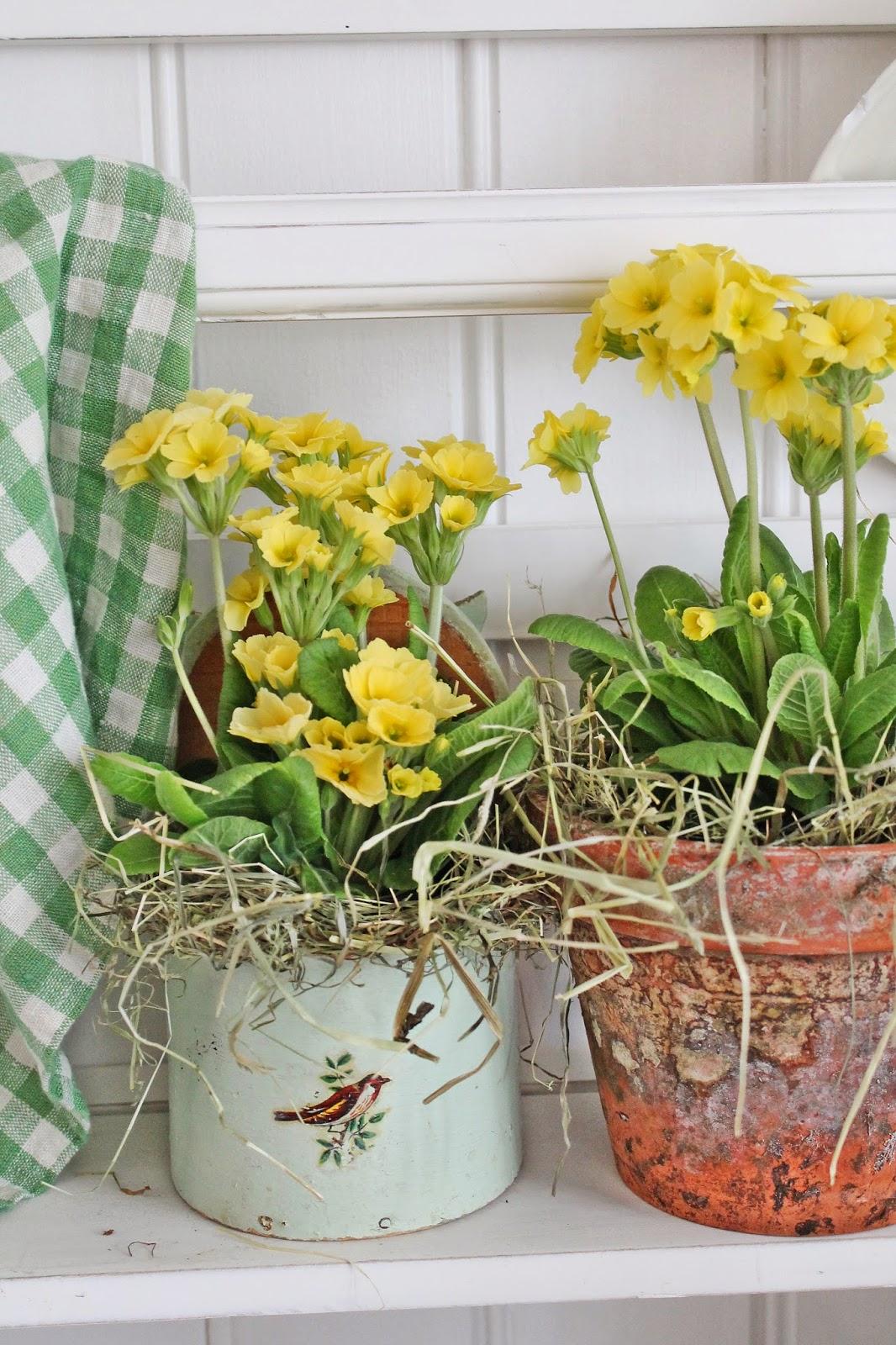 dekor/vesennie-cvety-k-pashe-foto-11.jpg