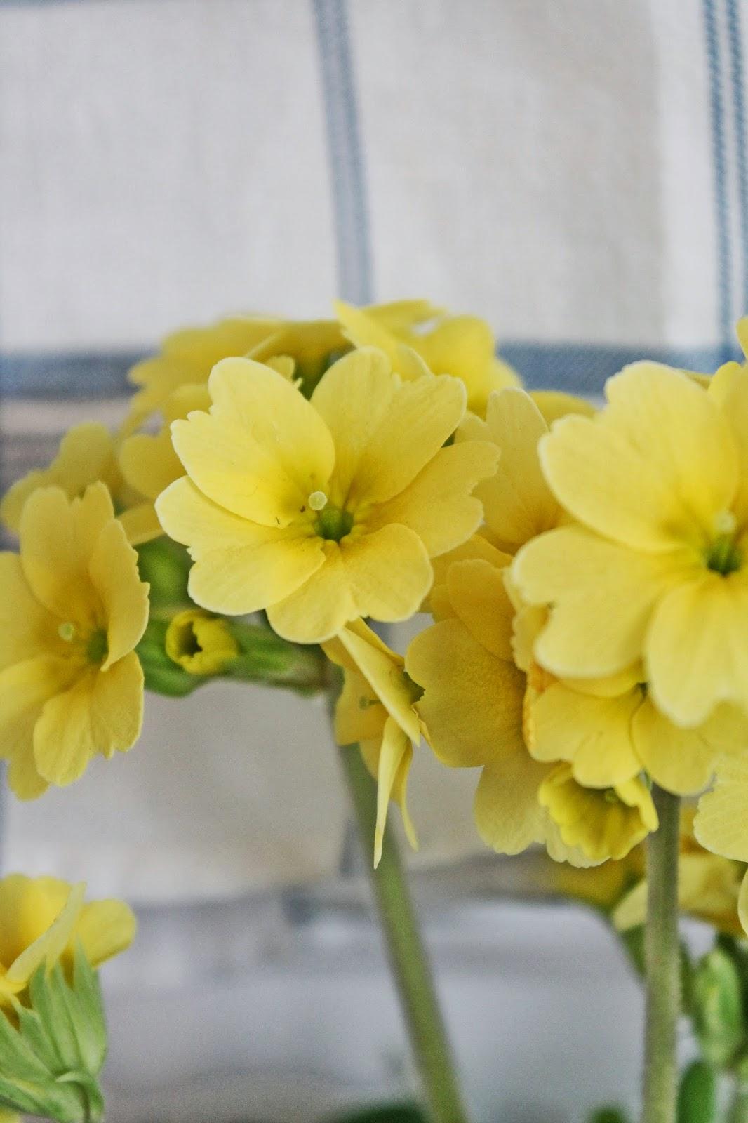 dekor/vesennie-cvety-k-pashe-foto-14.jpg