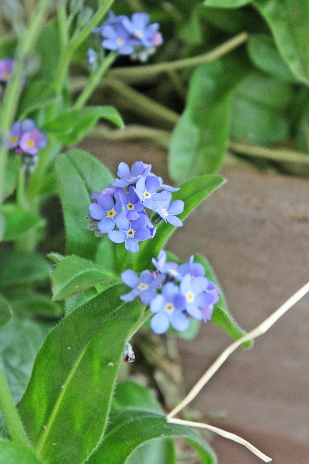 dekor/vesennie-cvety-k-pashe-foto-15.jpg