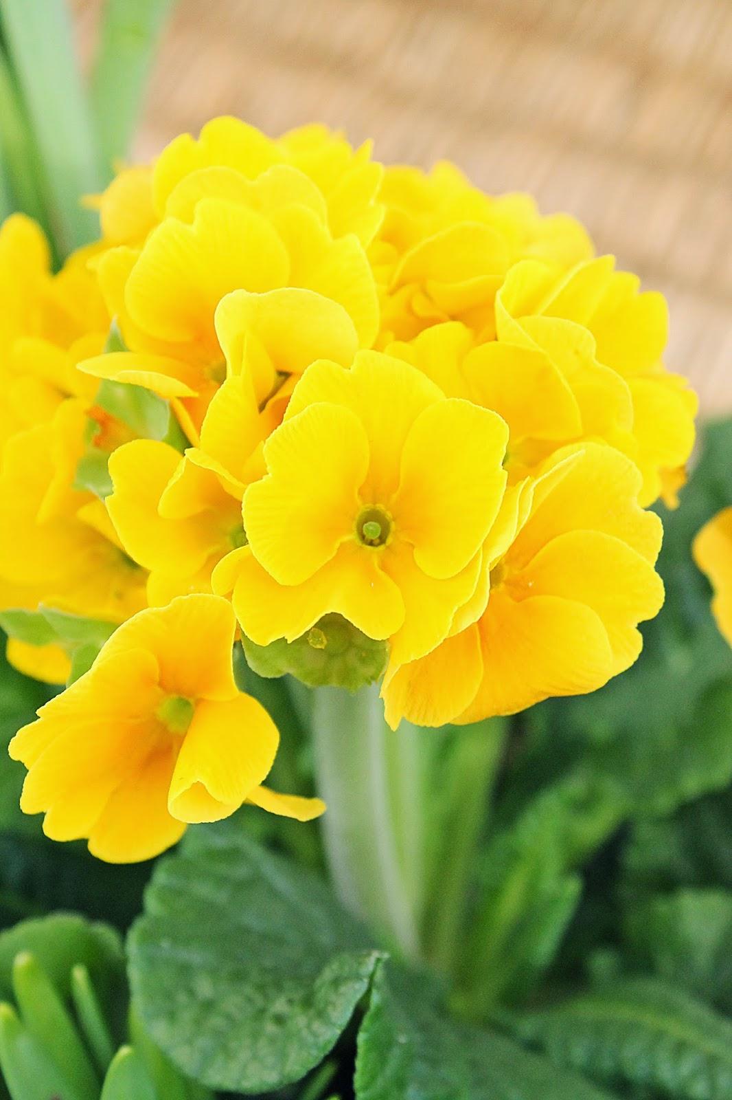 dekor/vesennie-cvety-k-pashe-foto-20.jpg