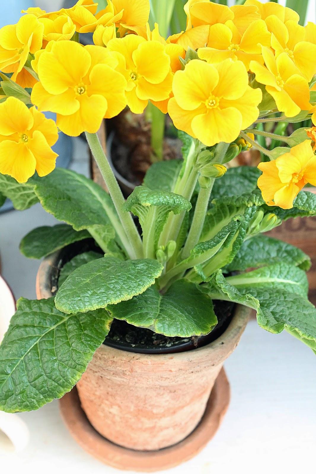 dekor/vesennie-cvety-k-pashe-foto-25.jpg