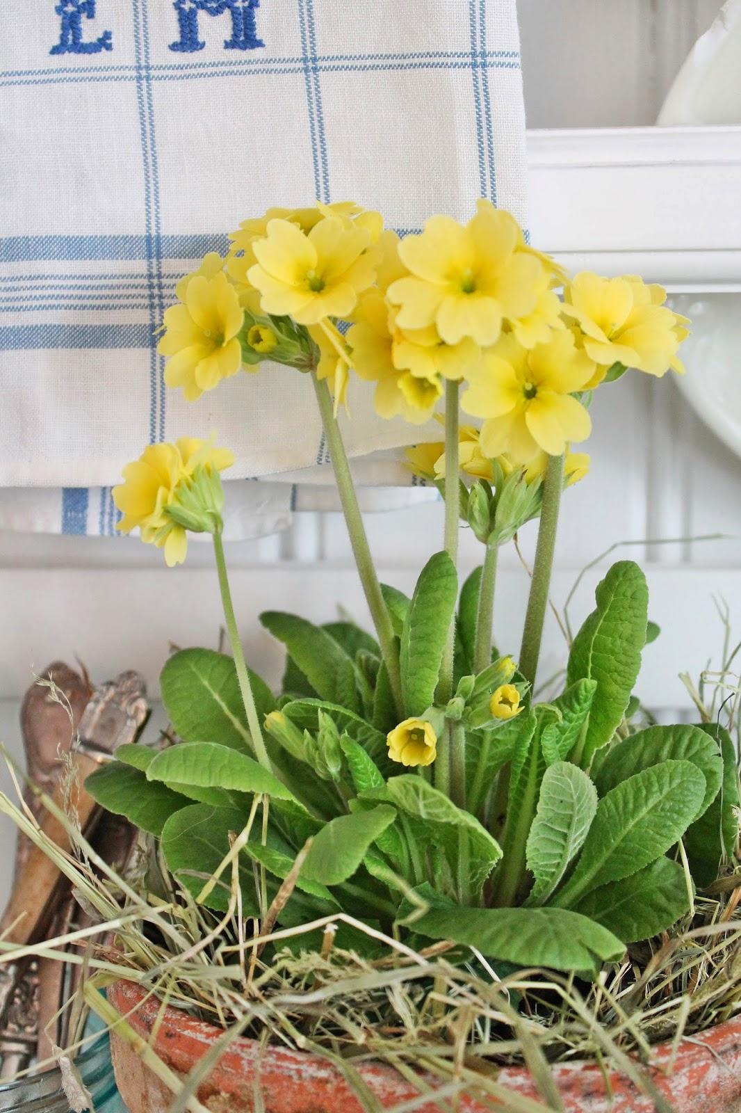 dekor/vesennie-cvety-k-pashe-foto-3.jpg