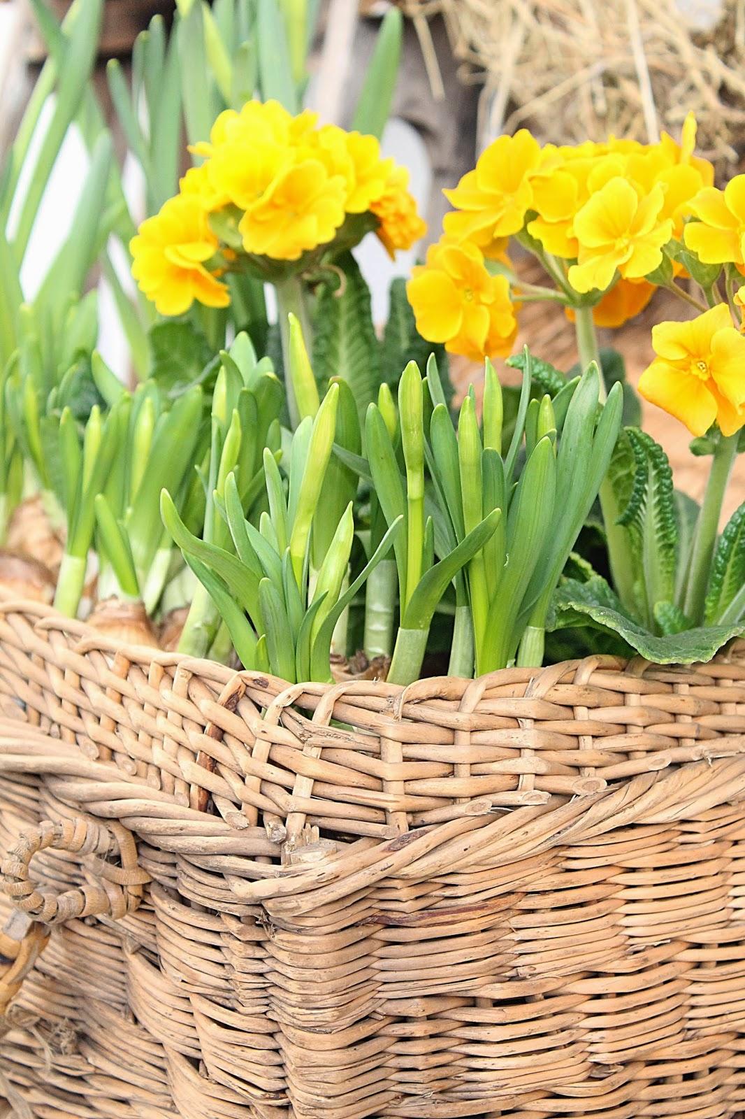 dekor/vesennie-cvety-k-pashe-foto-4.jpg