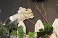 Кролики к пасхе своими руками: мастер-класс | Дизайн в стиле Прованс - французский стиль кантри в вашем доме