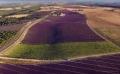 Лавандовые поля Прованса | Дизайн в стиле Прованс - французский стиль кантри в вашем доме
