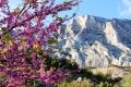 Гипнотическое очарование горы Сент-Виктуар | Дизайн в стиле Прованс - французский стиль кантри в вашем доме